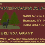 nw_biz_card_front-final-preview