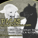 popes_biz_card_front-4-Tacha-preview